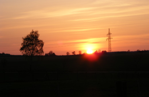 Tree and ironman in sundown