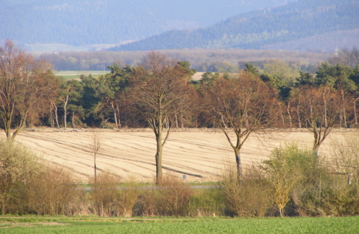 Fields with trees in front of the harz mountains