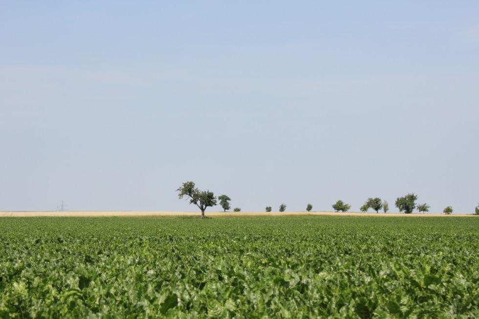Lonely trees on open field