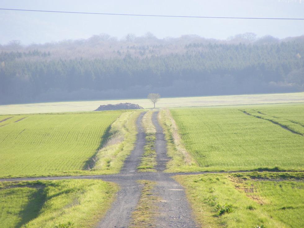 Path through green fields