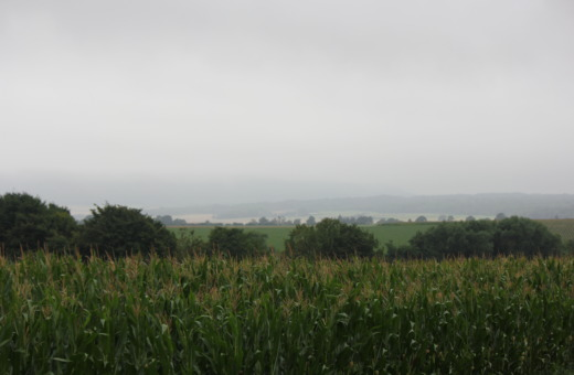 Corn fields on a rainy day