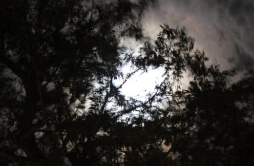 Moon behind trees mirroring in a puddle