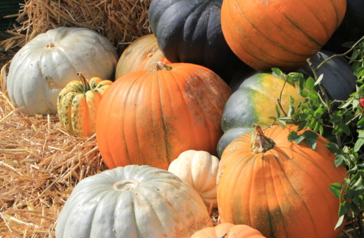 Pumpkins in different colors