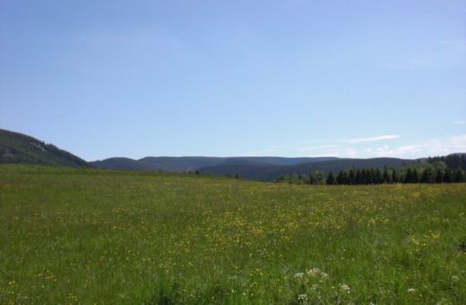 Grassland at harz mountains