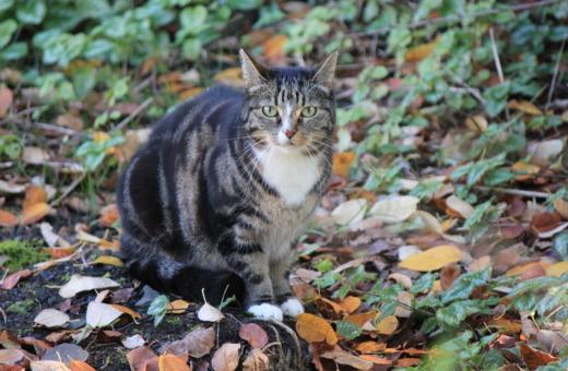 Gray cat between leaves