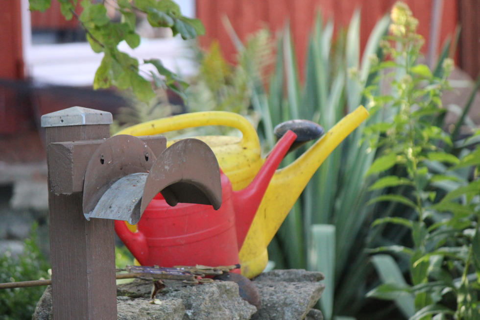 Watering cans in the garden