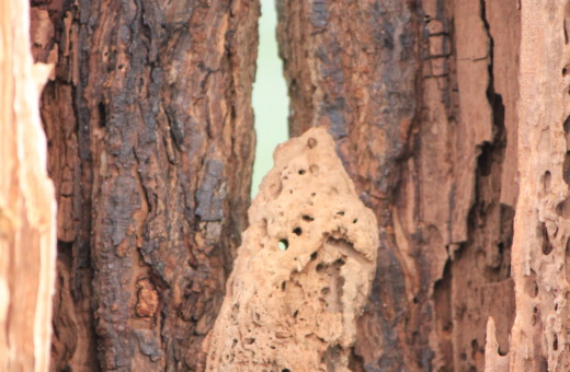 Wooden structure of a hollow tree