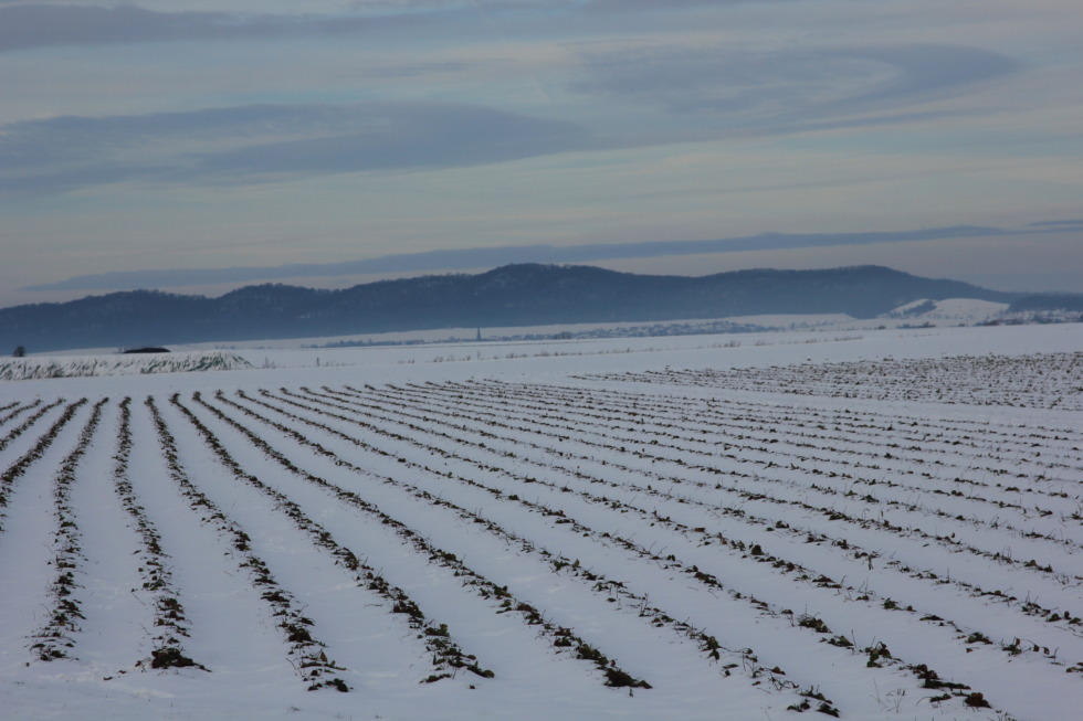 Snowy plowed acre