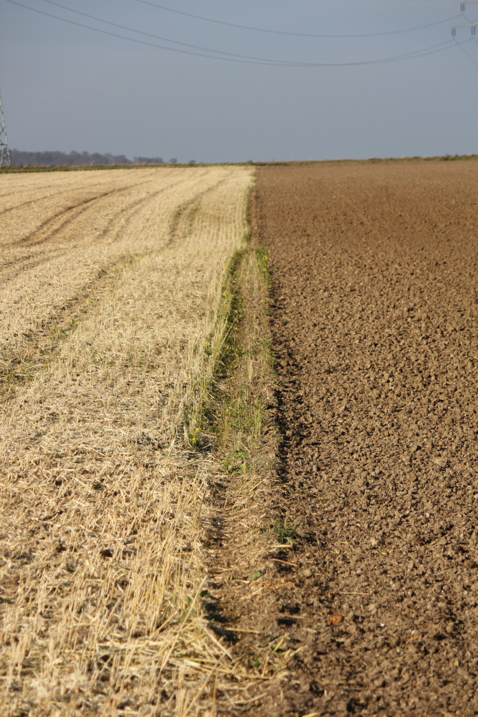 Corn field and acre - side by side