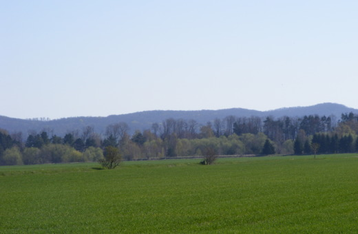Green grassland in the Harz' foothills