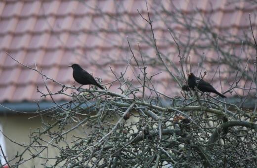 Merls on a tree