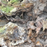 rotten-root-wood-structure