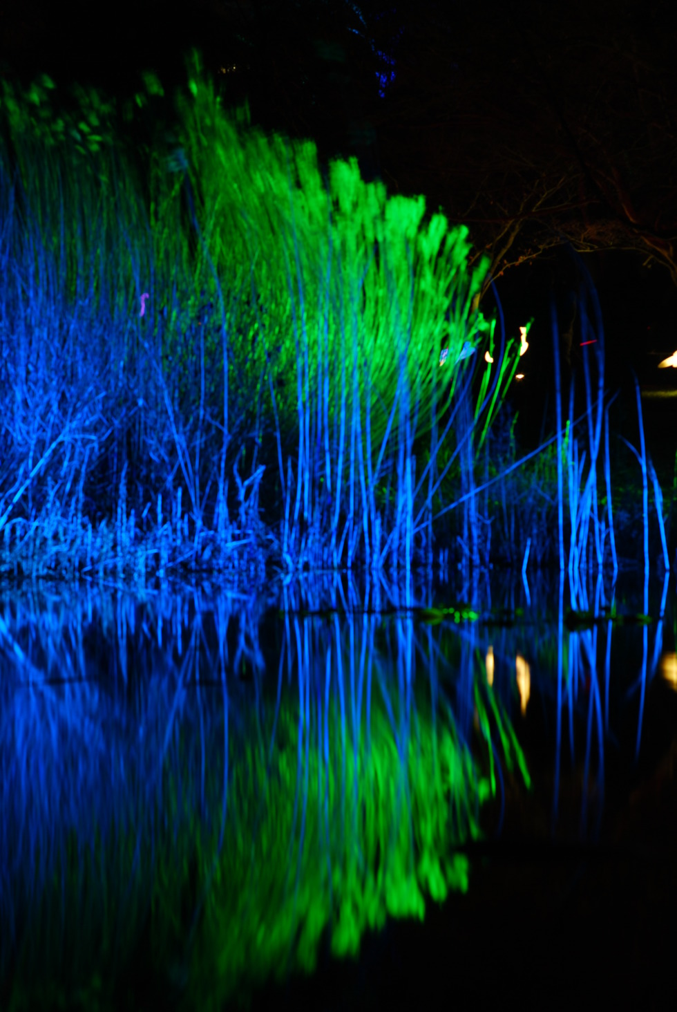Lighted reed mirroring in water
