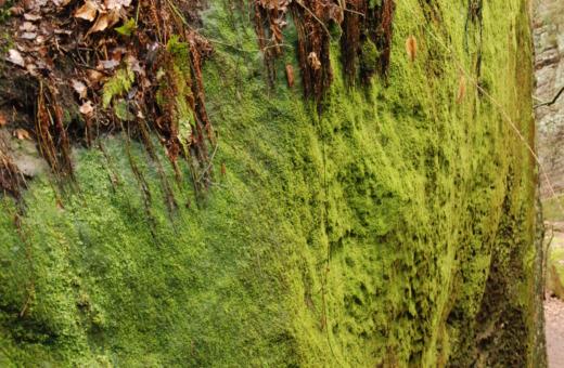 Mossy rock near Malá Skála