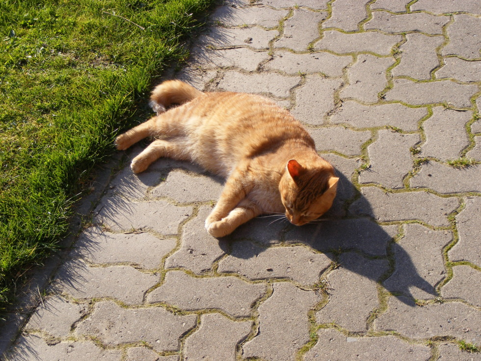 Orange cat lying on cobblestone