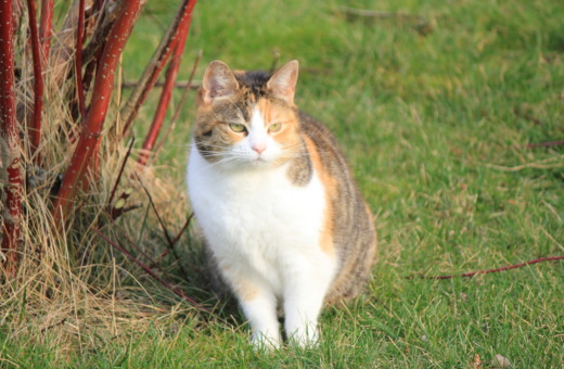 Striped cat on a meadow