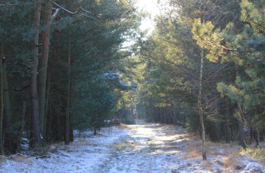 Light shines through winter forest