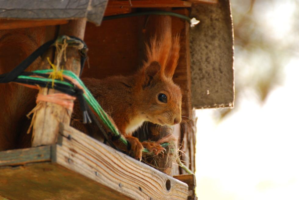 Squirrel sitting in a bird house