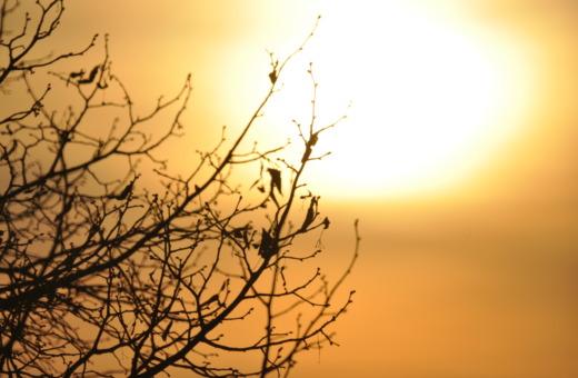 Birds sitting in sundown