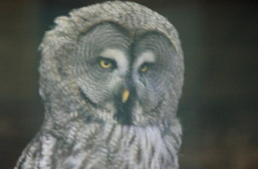 Dizzy owl