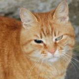 One eye blinded cat