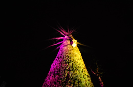 Pink and yellow spotlighted tree