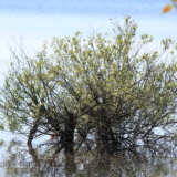Tree growing in water