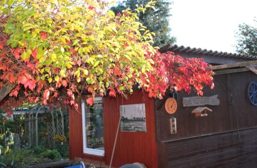 Colorful wine at grandpa's garden