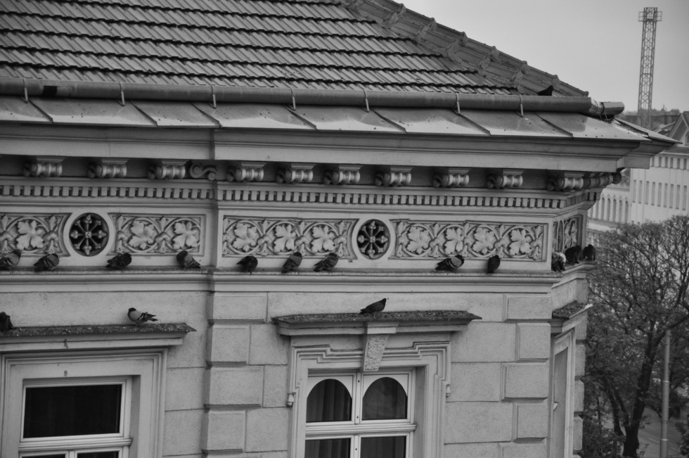 Pigeons on a old house in Vienna