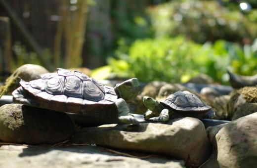Turtle sculptures in garden