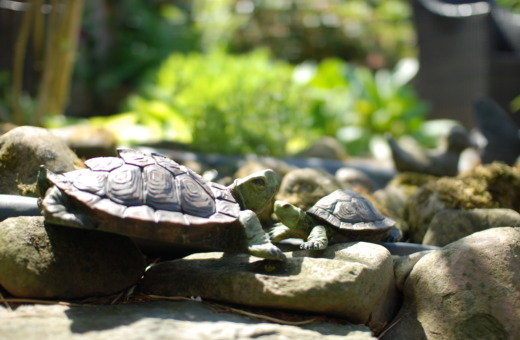 Turtle sculptures on stones