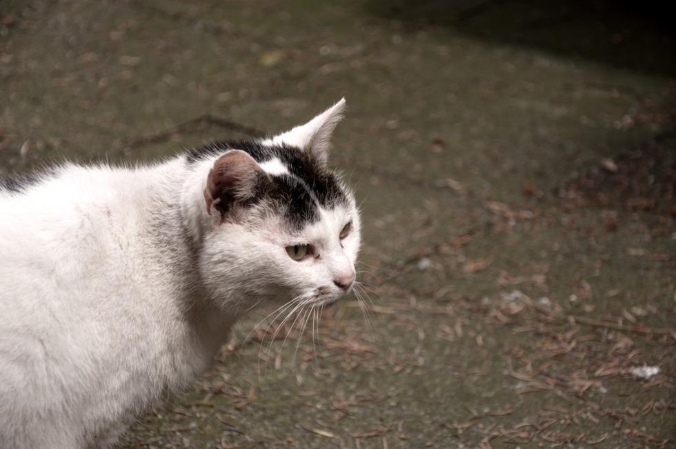 Black'n'white spotty cat