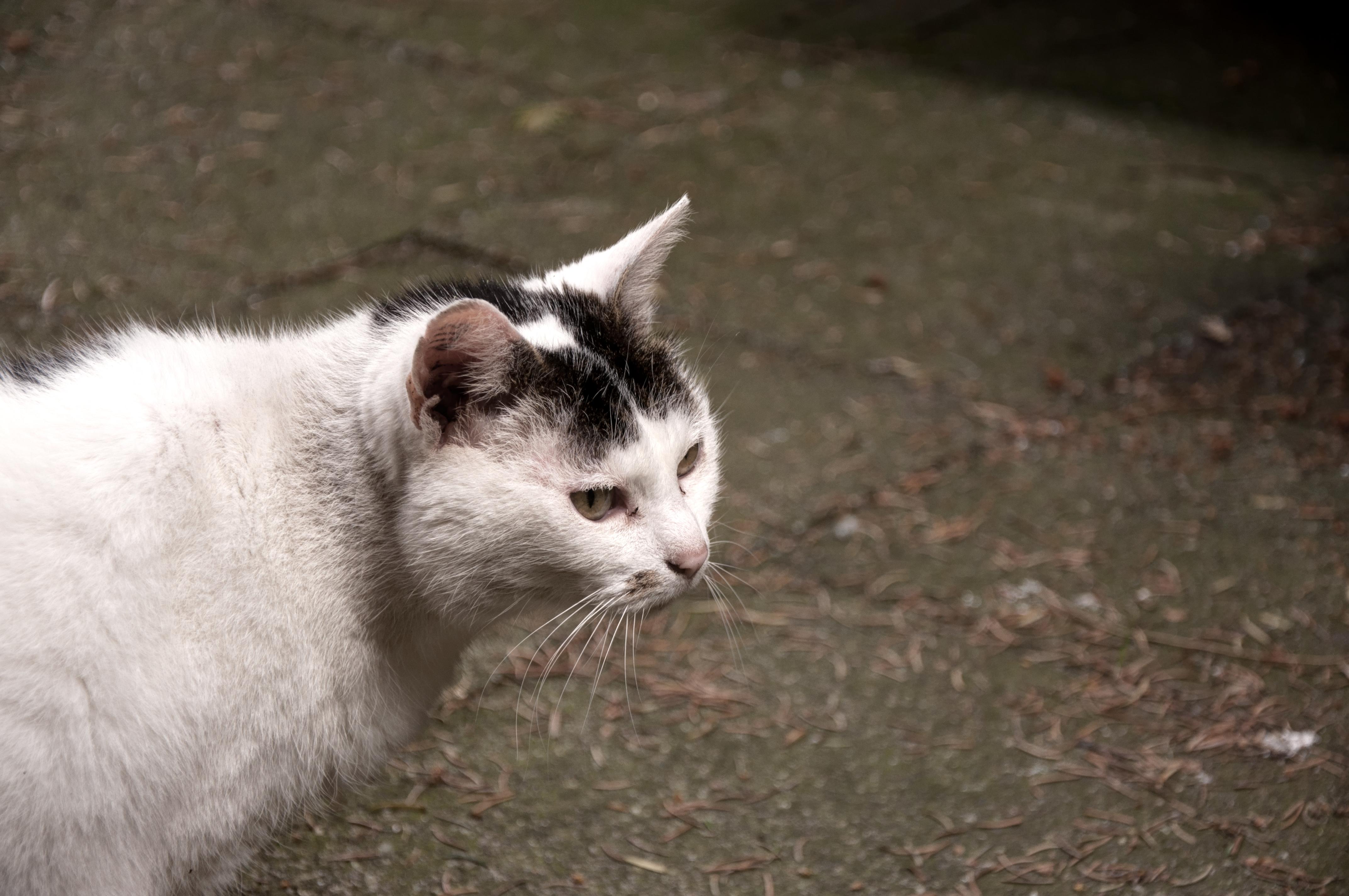 Black N White Spotty Cat Cc0 Photo