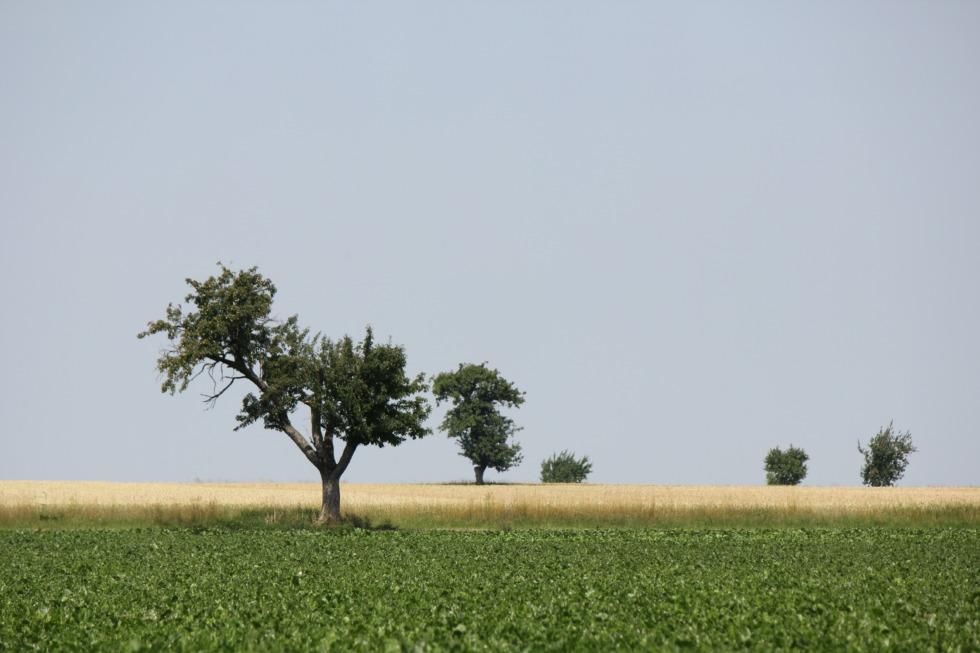 Trees on open fields