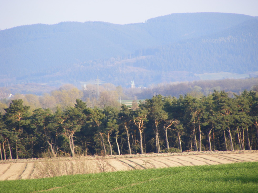 Small forest in front of the harz mountains