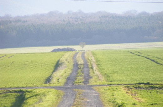 Path through green fields