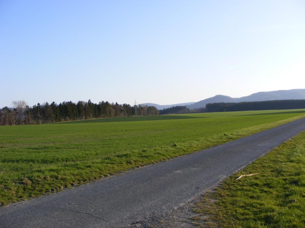 Small road between green fields