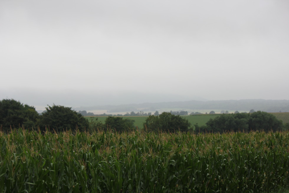 Corn fields on a rainy day