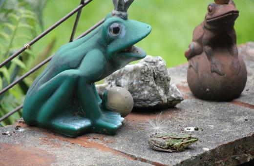 Frog familiy
