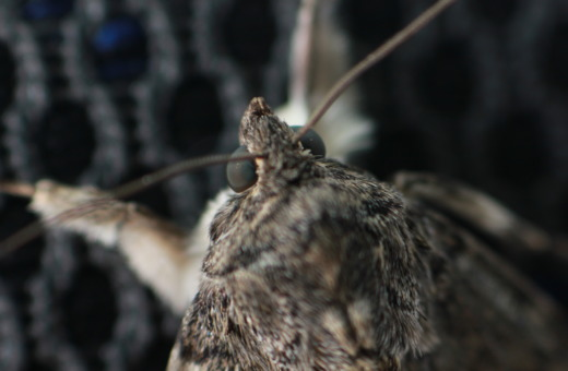 Moth in detail