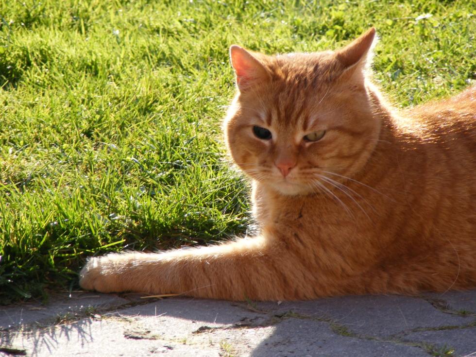 Black-eyed cat
