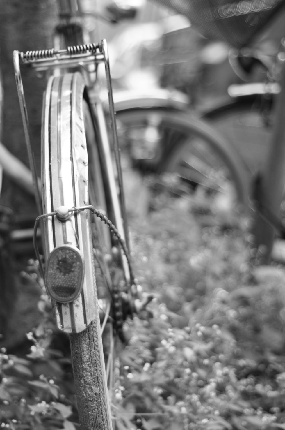 Old bicycle from behind