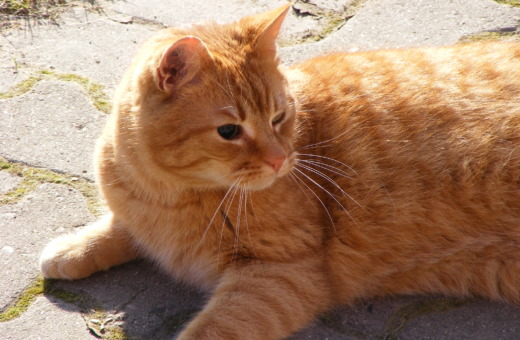 Blind cat in the sun