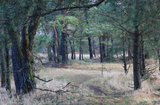 Woods alongside the Innerste near Bredelem