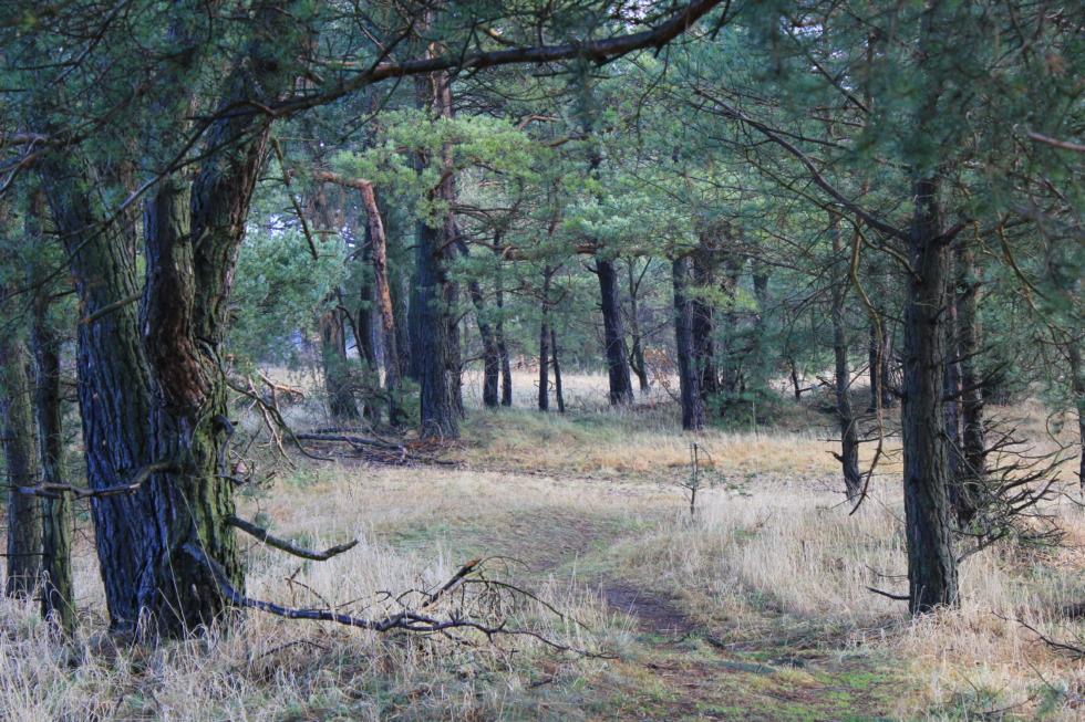 Woods alongside the Innerste near Bredelem