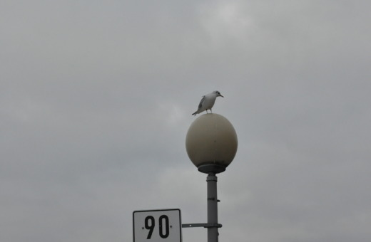 Seagull on a lantern at Medienhafen Düsseldorf