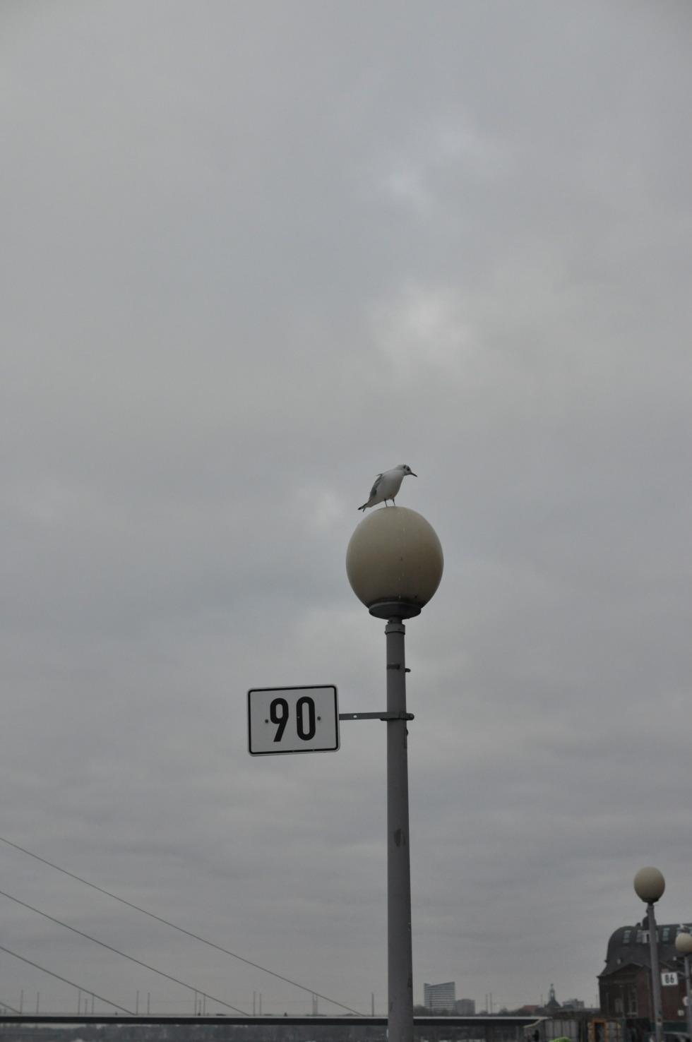 Seagull on a lantern at Medienhafen Düsseldorf