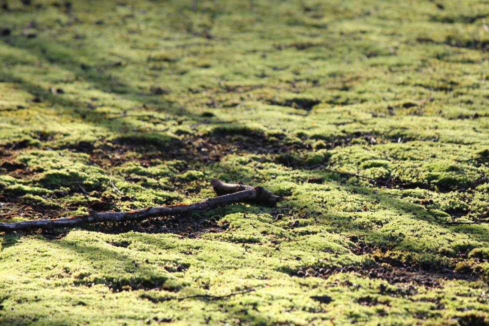 Moss-covered forest floor in sunlight