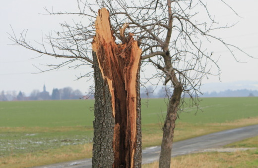 Split tree after lightning