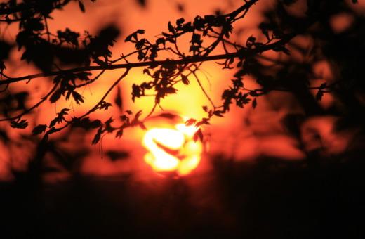 Burning sundown behind trees